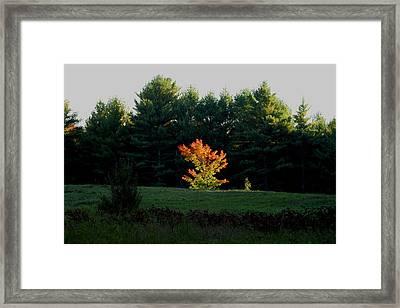The Blazing Tree Framed Print