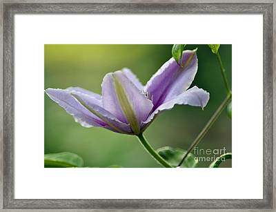 Framed Print featuring the photograph The Bloom by Tamera James