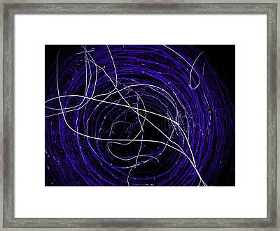Framed Print featuring the photograph The Blue Barb by Amy Sorrell
