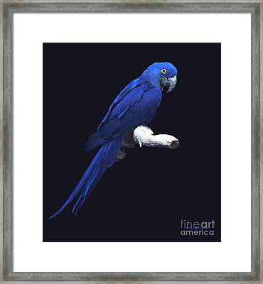 The Blue Beauty Framed Print