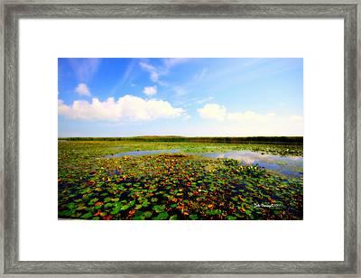 The Bog At Point Pelee Framed Print