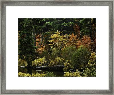The Boldness Of Autumn Framed Print by Diane Schuster