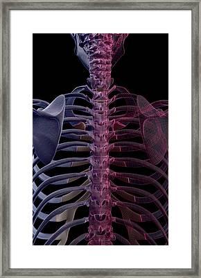 The Bones Of The Upper Body Framed Print by MedicalRF.com