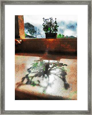 The Bonsai's Shadow Framed Print by Steve Taylor