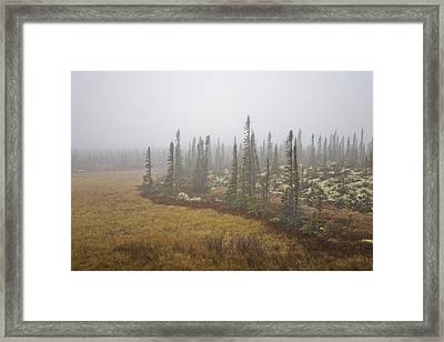 The Boreal Forest On A Foggy Day Framed Print by Taylor S. Kennedy