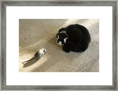 The Brave Mouse Framed Print by Carl Purcell