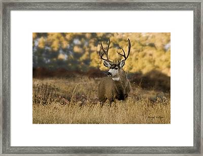 The Buck Stops Here Framed Print by Darryl Gallegos