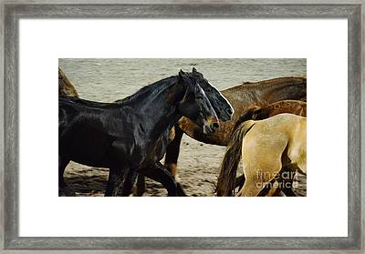 The Buddy System Framed Print by Lynda Dawson-Youngclaus