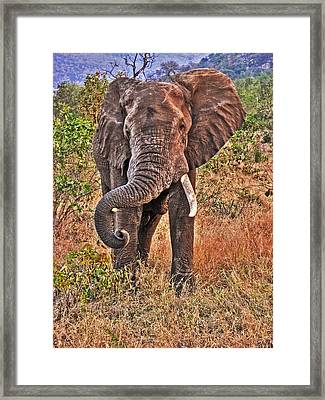 Framed Print featuring the photograph The Bull by William Fields