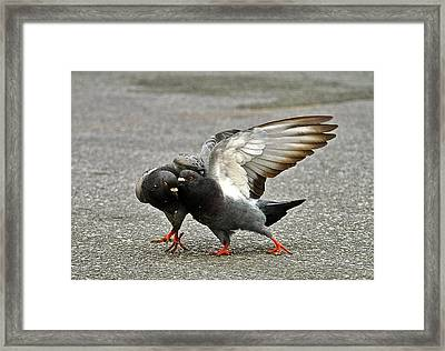 The Bully Framed Print by Jocelyn Kahawai