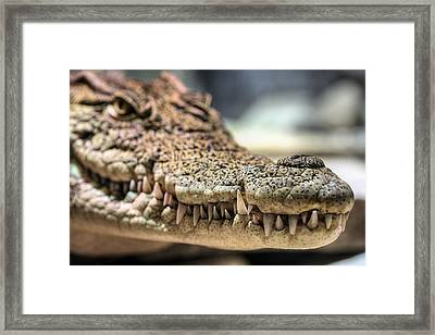 The Business End Framed Print by JC Findley