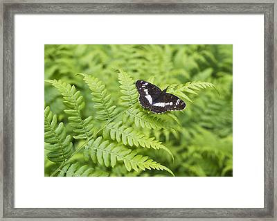 Framed Print featuring the photograph The Butterfly On Fern Sheet by Aleksandr Volkov