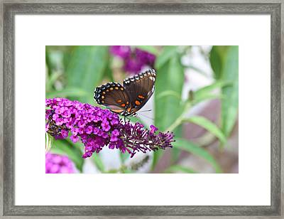 The Butterfly Tree Framed Print by Janet Mcconnell