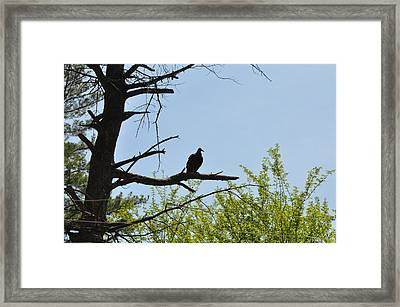 The Buzzard Is Two Faced Framed Print by Bill Cannon