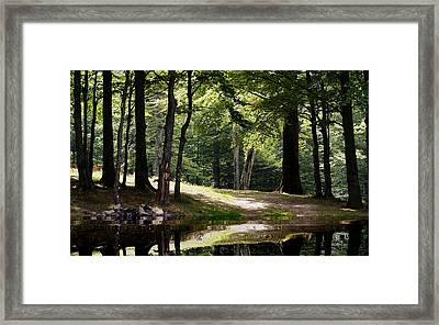 The Calm Of The Forest Framed Print