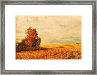 The Careful Breeze  Framed Print by Jerry Cordeiro