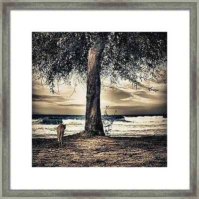 The Cat And The Sea Framed Print by Stelios Kleanthous