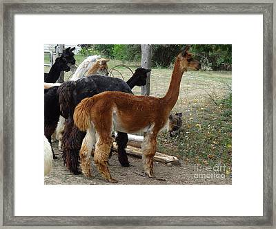 The Cat Came Back Framed Print