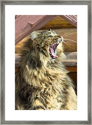 The Cat Who Loves To Sing Framed Print