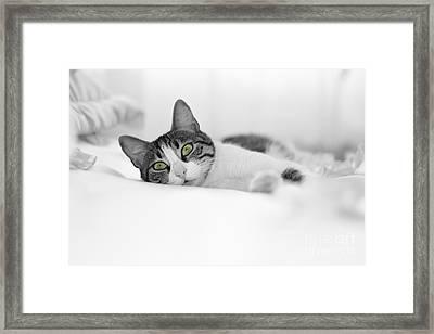 The Cat  Framed Print by Zafer GUDER