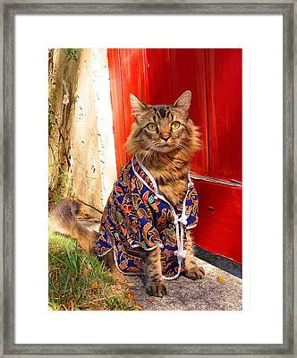 The Cat's Pajamas Framed Print by Joann Biondi