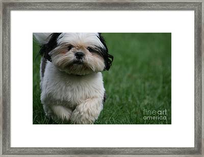 The Champion Framed Print by Valia Bradshaw