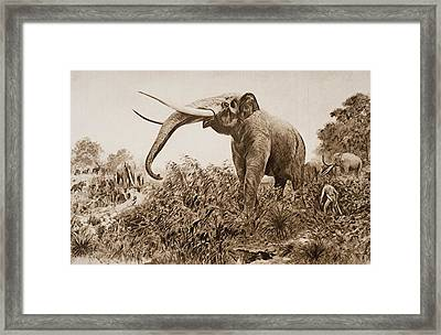 The Chatham Elephant. From Fossil Framed Print