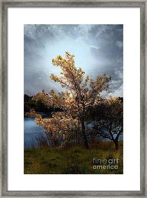 The Cherry Blossom Tree . 7d12703 Framed Print by Wingsdomain Art and Photography