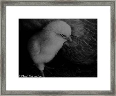 The Chick Framed Print by Heather  Boyd