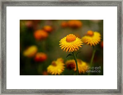 The Chosen One Framed Print by Syed Aqueel