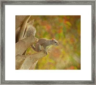 The Climber Framed Print by Kim Hojnacki