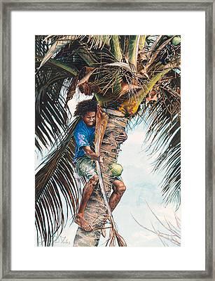 The Coconut Tree Framed Print