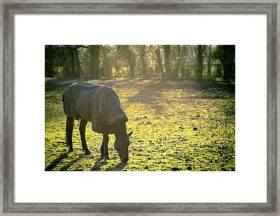 The Cold Horse Framed Print by Justin Albrecht