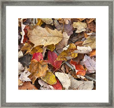 The Color Of Fall Framed Print