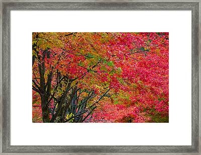 The Color Of Fall Framed Print by Ken Stanback