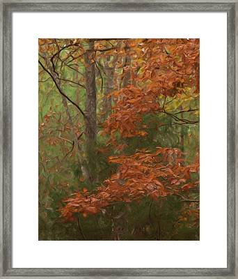 The Color Of Fall Framed Print by Steven Richardson