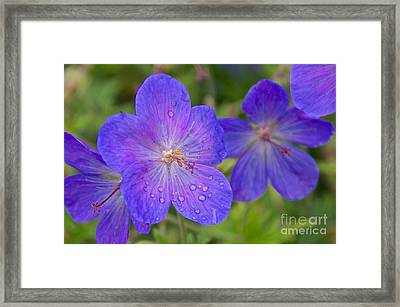 The Color Purple Framed Print by Sean Griffin