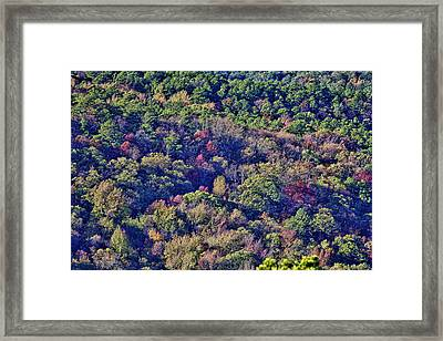 The Colors Of Autumn Framed Print by Douglas Barnard