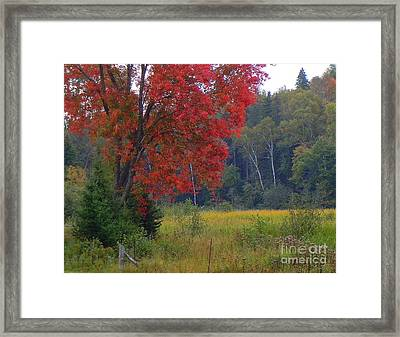 The Colors Of Fall Framed Print by Anne Gordon