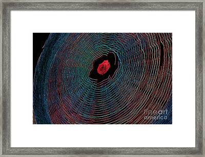 The Complications That Are Rosalynn Framed Print by The Stone Age