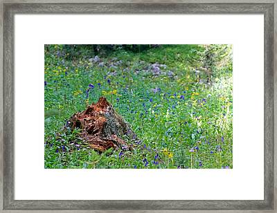 The Contrast Of Life And Decay Framed Print
