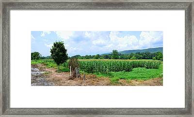 Framed Print featuring the photograph The Corn Field by Paul Mashburn