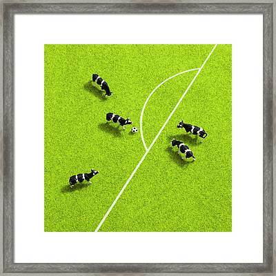 The Cows Playing Soccer Framed Print