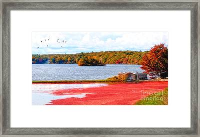 The Cranberry Farms Of Cape Cod Framed Print