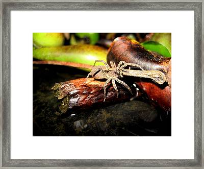 The Creep Framed Print by Catherine Natalia  Roche