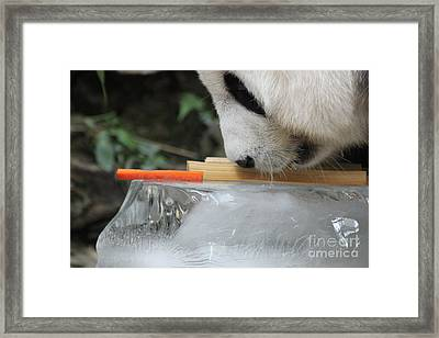 Framed Print featuring the photograph The Curiosity Of Orange #1 by Nola Lee Kelsey