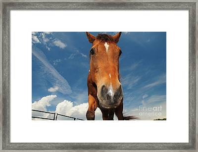 The Curious Horse Framed Print