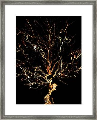 The Curious Tree Framed Print by Yvonne Scott