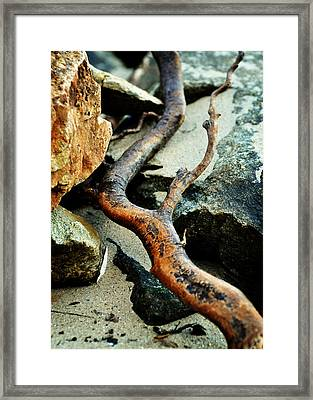 The Curving Branch Framed Print