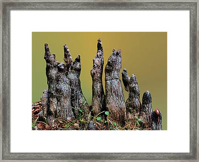 The Cypress Knees Chorus Framed Print by Kristin Elmquist